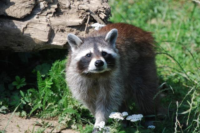 https://suedtirol-mit-kindern.com/wildpark-gustav-mahler/